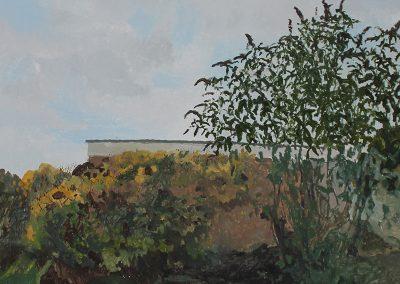 Hydrangea, Buddleja and Studio