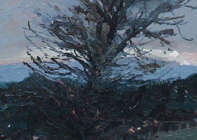Tree, Craiglockhart